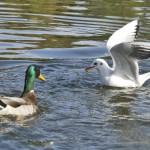 鳥インフルエンザA(H7N9)がパンデミックを起こす前に