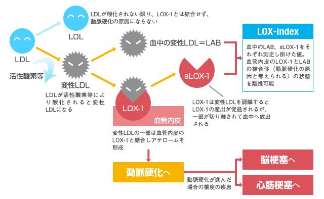 ロックス・インデックスで測定する酸化変性LDLとsLOX,1とは?